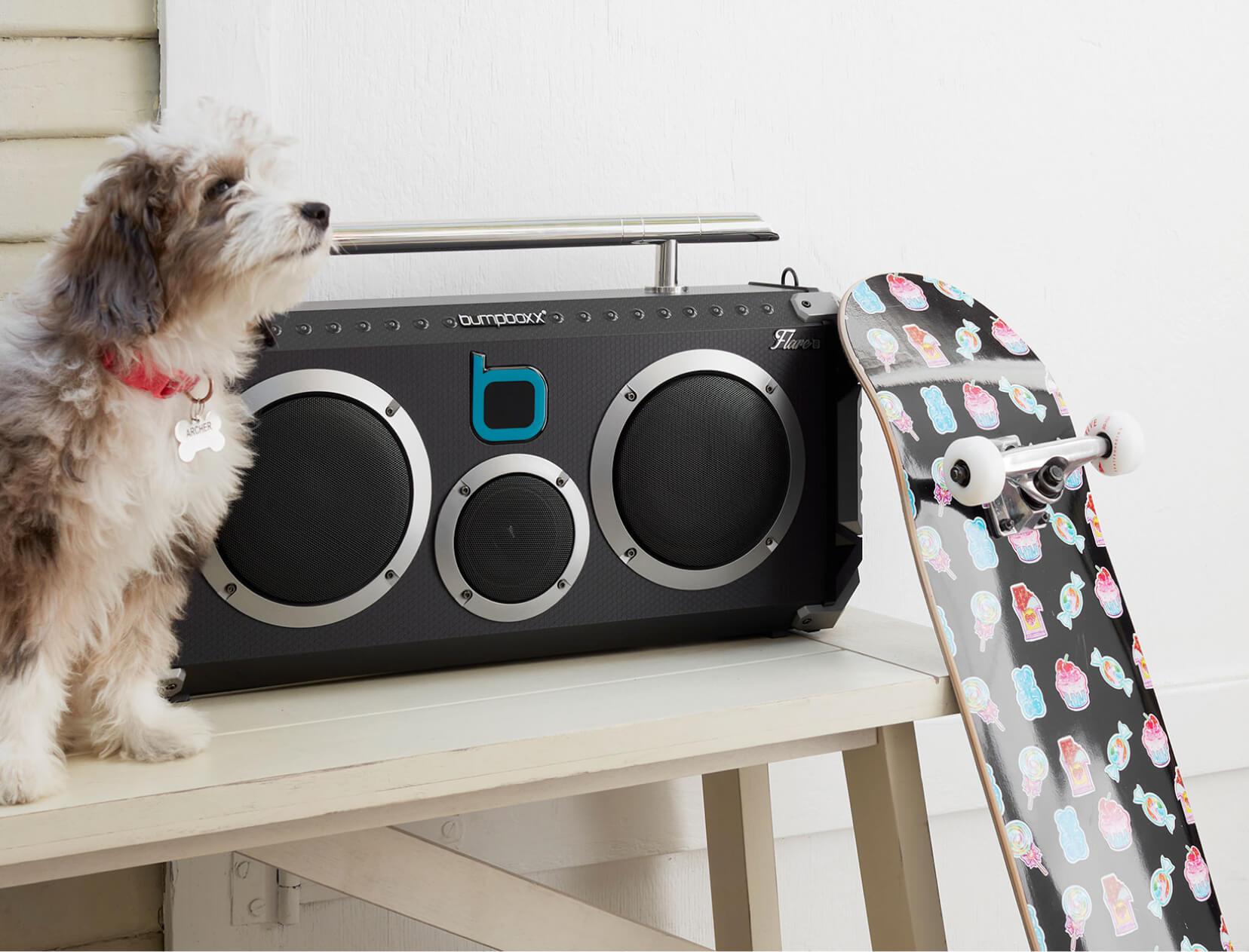 dog and boombox