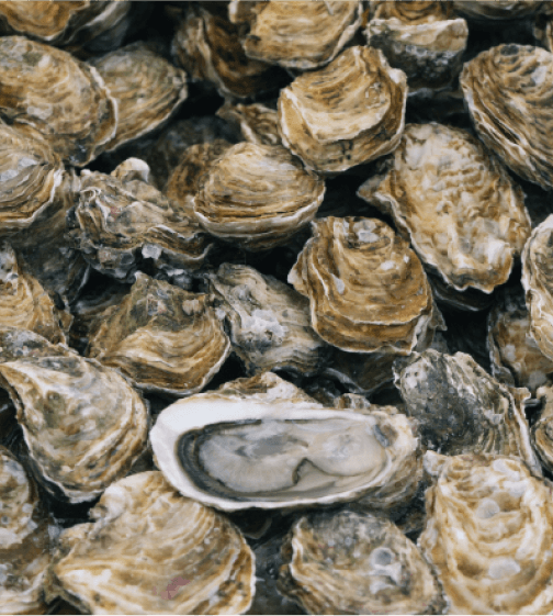 Island Creek Oysters Oyster of the Month Club