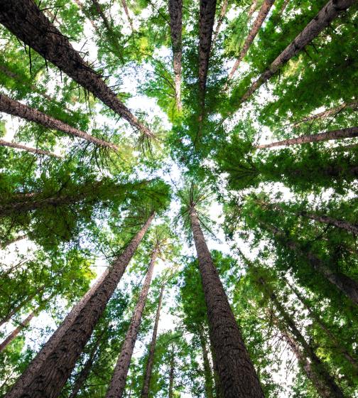 8 Billion Trees Conserve 100 Trees