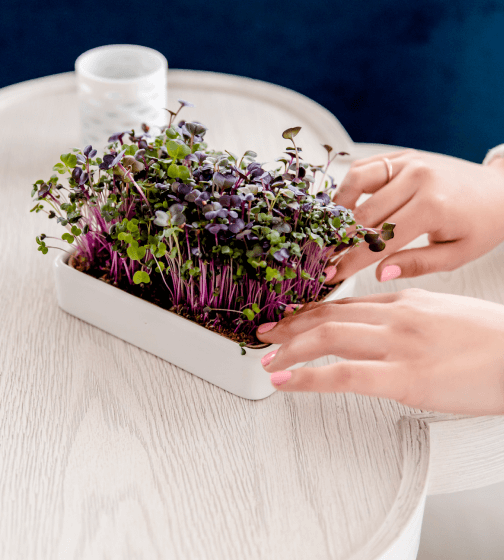 Back to the Roots Microgreens Grow Kit